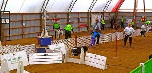 Hot Diggity Dogs and Flyball Racing